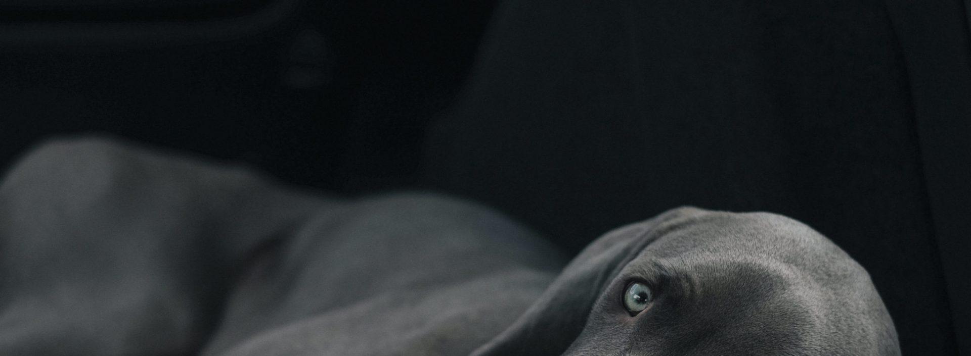 L' Educateur canin et Promeneur de chiens du Grand Lyon – Amusos